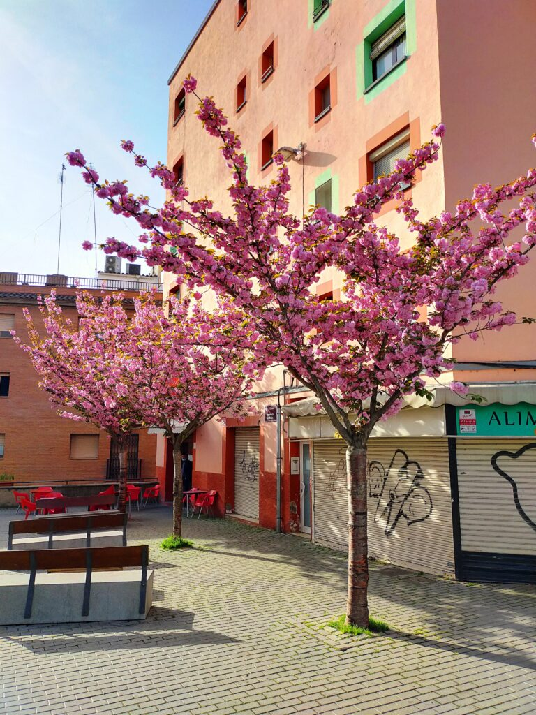 Льейда цветение персиков